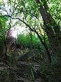 Defileul rîului Saharna în apropierea mănăstirii Saharna..JPG