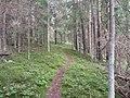 Degučių sen., Lithuania - panoramio (187).jpg
