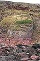 Devonian Rocks - geograph.org.uk - 215986.jpg