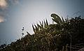 Dinosaurio (5115365297).jpg