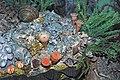 Diorama of a Permian seafloor - rugose corals, algae, gastropod, richthofenid brachiopods, spiriferid brachiopods (44980642714).jpg