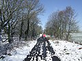 Dog walkers on the old railway - geograph.org.uk - 754725.jpg