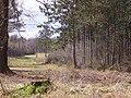 Doorkijkje in Haulerveld - panoramio.jpg