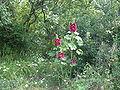 Duino-Aurisina-IMG 2923.JPG