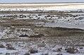 Dunst Etosha Oct 2002 slide379.jpg