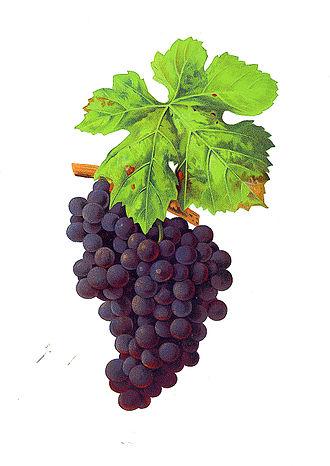 Dureza - Dureza grapes