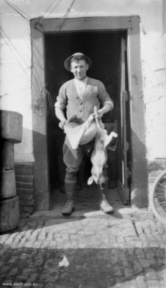 Australian Army Catering Corps - France, April 1918. Sergeant J. C. E. Rosengard, a sergeant cook of the 3rd Battalion drawing rations of bread and hare from a farmhouse, after Strazeele, between Sec-Bois and Borre, which was used as 3rd Battalion Headquarters. At this time, on account of the rapid evacuation of civilians, there were great quantities of flour, potatoes and livestock left at farmhouses, and the troops defending the area fared well.