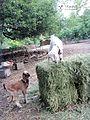 EL PARAISO DE LOS ANIMALES Primera granja santuario de rescate animal en Argentina.jpg