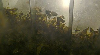 Ecological light pollution - Insects killed by attraction to a buried light box.