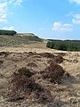 Edge of The Pilot - geograph.org.uk - 378855.jpg