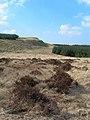 Edge of The Pilot - geograph.org.uk - 378855.jpg