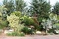 Eleouthkia Traditional and Botanical Park, Cyprus - panoramio (17).jpg