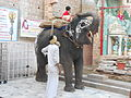 Elephant in a temple, Jodhpur, Rajasthan.jpg
