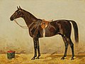 Emil Volkers - Black Horse in the Stable II.jpg