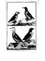 Encyclopedie volume 5-083.png