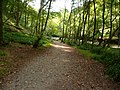 Exmoor , Tarr Steps Woods Riverside Path - geograph.org.uk - 1496916.jpg