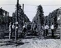 Experimental Hop Duster, 1941, Hop Field Day (9173739241).jpg