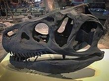FMNH Allosaurus skull cast.jpg