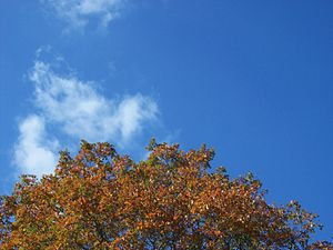 A tree and a sky, taken at my city park.