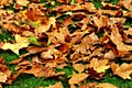 Fallen autumn leaves with Orton effect.jpg