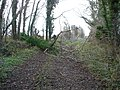 Fallen tree on track near Greenclose Farm - geograph.org.uk - 299815.jpg