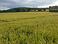 Farmland, Bledlow - geograph.org.uk - 892865.jpg