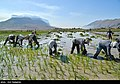 Fars Province 2020 (14).jpg