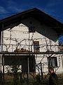 Fasadna trta (5660924562).jpg