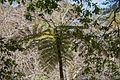 Fern tree (34140304574).jpg