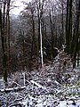 First Snow In The North Of Black Forest - panoramio.jpg
