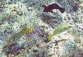 Fish 18a (30880463182).jpg