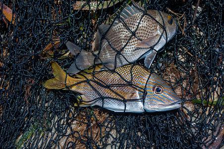 Fishing in El Manglillo Bay, Margarita Island 15