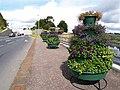 Floral Display, Omagh - geograph.org.uk - 521828.jpg