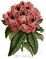 Flore des serres v14 089a.jpg