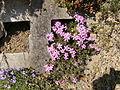 Flower.2390.JPG