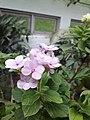 Flower20170706 151532.jpg