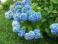 Flower 658.jpg