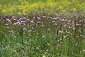 Flower meadow in Bavaria.jpg