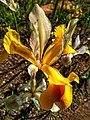 Flower photography - Photo by Giovanni Ussi 35.jpg