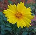 Flowers (154).jpg