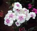 Flowers - Uncategorised Garden plants 07.JPG