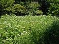 Flowers - panoramio (15).jpg