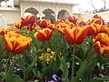 Flowers Like Candy (15374553211).jpg