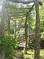 Footbridge and Pergola - geograph.org.uk - 1919889.jpg