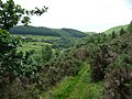 Footpath above the Mynach valley in early July - geograph.org.uk - 1945301.jpg