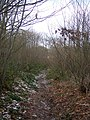 Footpath in Broadwell Wood - geograph.org.uk - 1658586.jpg