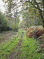 Footpath in Farnham Woods - geograph.org.uk - 269181.jpg