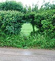 Footpath through a hedge - geograph.org.uk - 1622344.jpg