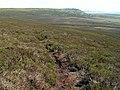 Footpath to Grinah Stones - geograph.org.uk - 456916.jpg