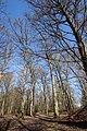 Forêt Départementale de Beauplan à Saint-Rémy-lès-Chevreuse le 14 mars 2018 - 02.jpg